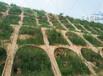 杭州哪里有賣綠化草籽怎么種植?