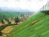 杭州蕭山區公路護坡草籽綠化草種批發
