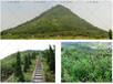 杭州市護坡草籽有哪些?高羊茅護坡草籽好嗎?