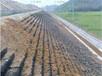 室外護坡綠化養護公司杭州承包邊坡四季養護
