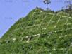 高速公路綠化草籽杭州市優質批發商