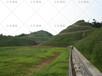 浙江杭州市小區綠化草籽多少錢怎么賣?