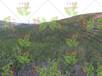 邊坡綠化過程復綠用到的材料種子杭州店面呢?