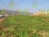 杭州蕭山區鐵路邊坡綠化種子怎么賣?
