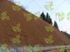 杭州高速公路邊坡綠化基本用到的草種有哪些?