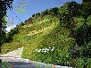 復綠滿山綠化專用草籽杭州市場出售