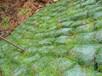 杭州河塘邊坡植生袋護坡效果圖片展示