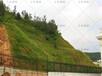 浙江湖州市高速公路綠化生態草籽哪有賣?