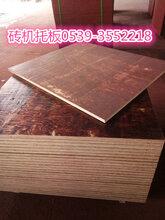 砖机竹胶板价格新报价图片
