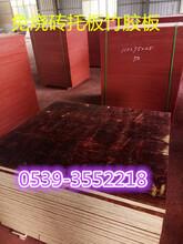 一次成型竹胶板价格空心砖竹胶板售价图片