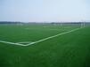 日照足球场人造草坪建设