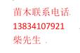 钙果树苗7号钙果树苗6号钙果苗钙果苗价格