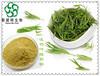 淡竹叶提取物药食同源速溶淡竹叶粉
