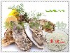 牡蛎提取物牡蛎肽98%牡蛎低聚肽斯诺特生物