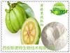 藤黄果提取物羟基柠檬酸罗望果提取物减肥瘦身保健美容