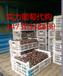 京亚葡萄价格行情葡萄图片晋州葡萄功效与作用