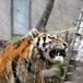 不锈钢绳网不锈?#30452;?#32455;绳网,防护网,室内装饰绳网,不锈钢防护名策丝网制品