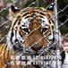 厂家直销马戏团防护网马戏团围网马戏安全网动物防护网