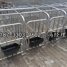 齐齐哈尔畜牧养殖母猪定位栏规格镀锌管保胎限位栏多少钱图片