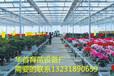 华首厂家大量供应花卉育苗床苗床网