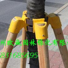 塔城乌苏树木支撑杆、苗木保护支架生产厂家