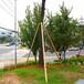 阿勒泰福海县树木支撑杆、护树支架生产厂家