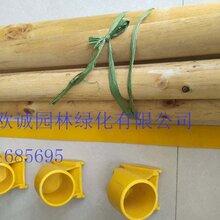 塔城沙湾县树木支撑杆、苗木保护架生产厂家