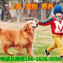 上海浦东宠物寄养30/天宠物狗寄养宠物猫寄养