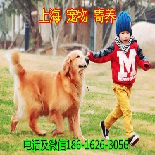 上海浦東寵物寄養30/天寵物狗寄養寵物貓寄養圖片