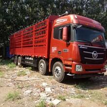 福田欧曼前四后八水泥罐车、处理各种半挂车牵引车头、散装水泥罐车价格