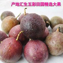 汇生荟社风味浓郁百香果供应批发汇生五彩田园新鲜现摘百香果图片