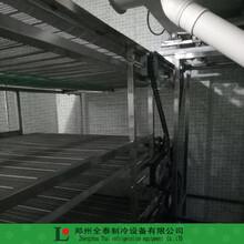 陕西网带红薯速冻机板带式蔬菜速冻隧道厂家