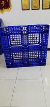 銅(tong)仁(ren)銅(tong)仁(ren)市包裝托盤(pan)公司-廠家直銷