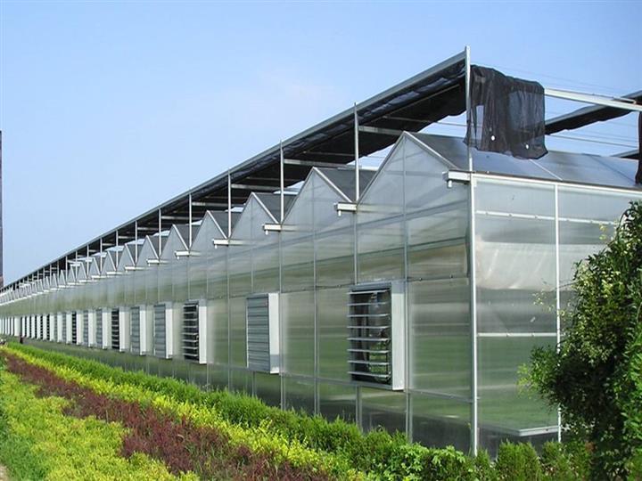 阳光板温室大棚每平米造价_建设阳光板温室造价是多少