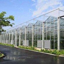 阳光房温室,阳光房温室大棚,新型智能温室大棚,生态农业
