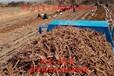 山东菏泽赤芍种苗量大从优质量保证