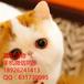 广州哪里?#26032;?#23456;物猫多少钱一只已做好疫苗包健康