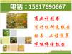 臺北縣會代寫物業投標書性價比高