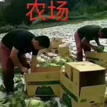 资讯:派遣公司办理出国粤菜厨师免费提供食宿劳务输出图片