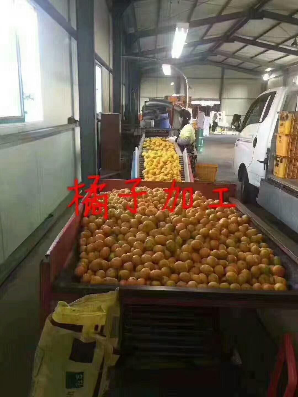 正规出国劳务蔬菜种植工(陕西劳务输出欢迎你!