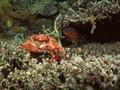进口螃蟹标签不合格怎么办图片