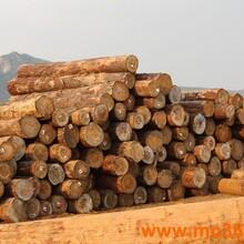 加纳刺猬紫檀进口清关手续及费用-广州刺猬紫檀报关公司