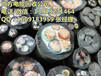 天津电缆回收-废旧电缆回收/天津电线破旧铜回收
