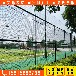 东莞工业园球场护栏,学校篮球场围栏,东莞小区运动场护栏