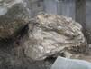 常用作假山的石头为园林平添几分自然之气