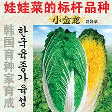 河南华蔬种业供应春秋黄心白菜