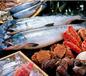 上海水產品報關需要哪些單證