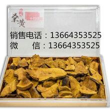 桑黄哪里的好野生桑黄哪里的最好桑黄多少钱一斤