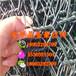 金豪镀锌优质石笼网厂六角网厂家畅销