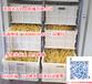 大型豆芽机豆芽机报价多功能豆芽机厂家豆芽机生产豆芽视频无需人工看管操作简单